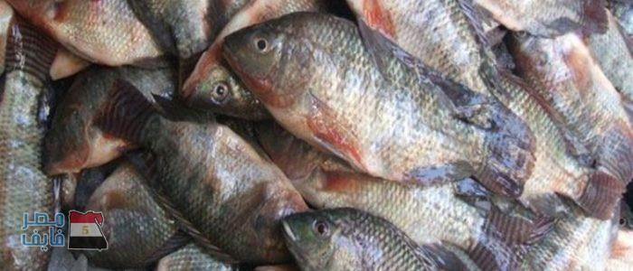 أسعار الأسماك اليوم  في الاسواق المصرية .. اشتعال الأسعار