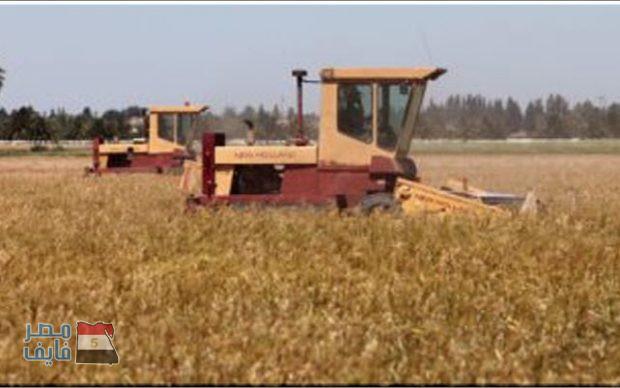 الزراعة تكشف عن قرارات جديدة وفورية لتأمين القمح للعام الجاري