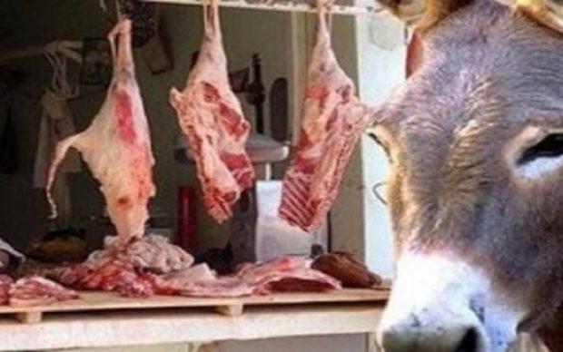 9 معلومات تساعدك على اكتشاف لحوم الحمير والكلاب والخنازير قبل تناولها