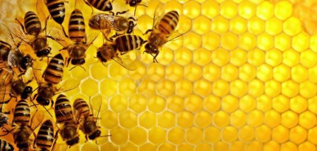 مصر في طريقها إلى العالمية في إنتاج عسل النحل