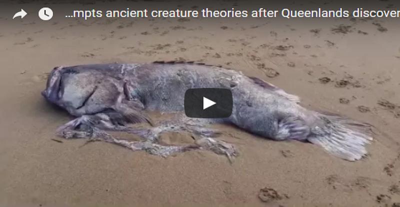 بالفيديو.. مخلوق بحري غريب يظهر على شواطيء استراليا يثير حيرة العلماء