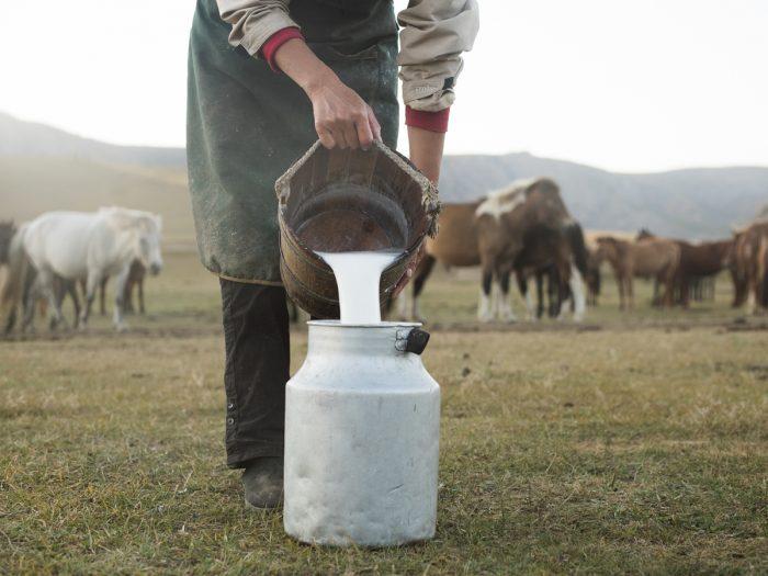 فوائد حليب الحصان و علاقته بلبن الأم ومناعة الأطفال حديثي الولادة