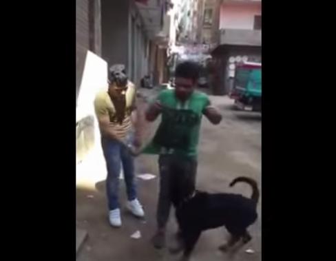 شاهد.. النشطاء يتداولون صور « بلطجي الكلب» بعد القبض عليه