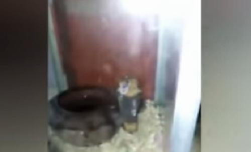 عاجل بالصور والفيديو| حالة من الذعر والرعب تُصيب المواطنين بعد العثور على ثعبان كوبرا في الغربية