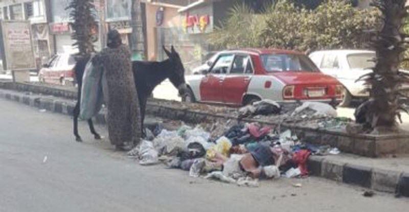 فيديو تراكم القمامة بـ «مدينةالزقازيق» ينتشر على الانترنت.. شاهد