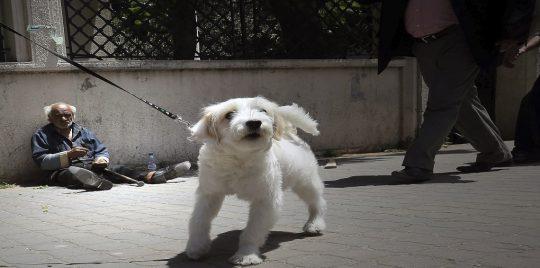 محكمة القضاء الإداري المصرية: الحبس 6 أشهر لأي شخص يصطحب كلبًا من دون ترخيص لحيازة وتربية حيوان أليف