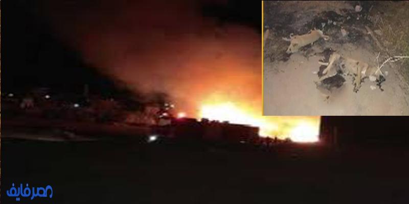بالفيديو| إيمان الحصري تكشف تفاصيل صادمة حول حرق كلاب المعادي وتواطؤ صريح من الحي
