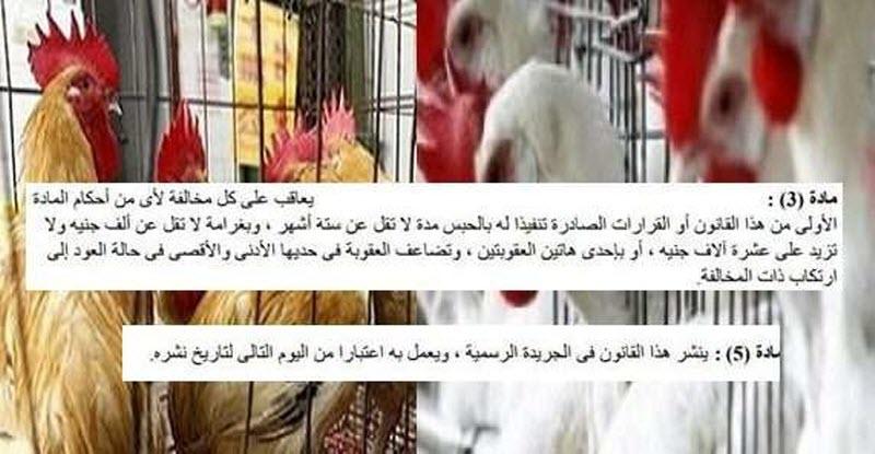 عاجل | تفعيل قانون حظر بيع الدواجن الحية .. تعرف على الأسباب