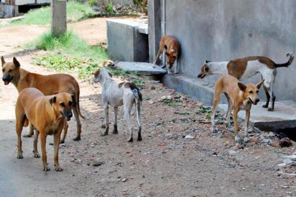 حدث في حلوان: عمال صينيون يذبحون كلابا ضالة ويأكلونها ونشطاء التواصل الاجتماعي يطالبون بالتحقيق معهم