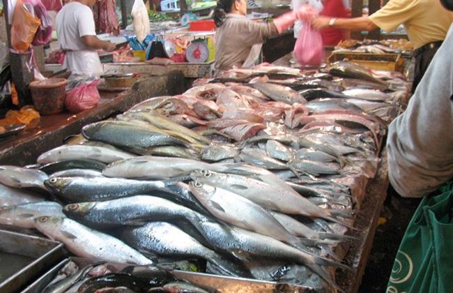 تعرف على أسعار الأسماك في السوق.. اليوم الأحد