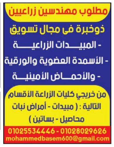 إعلانات وظائف جريدة الوسيط الأسبوعي 22