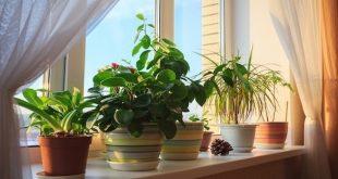 6 نباتات خضراء تجلب الطاقة الايجابية إلى المنزل
