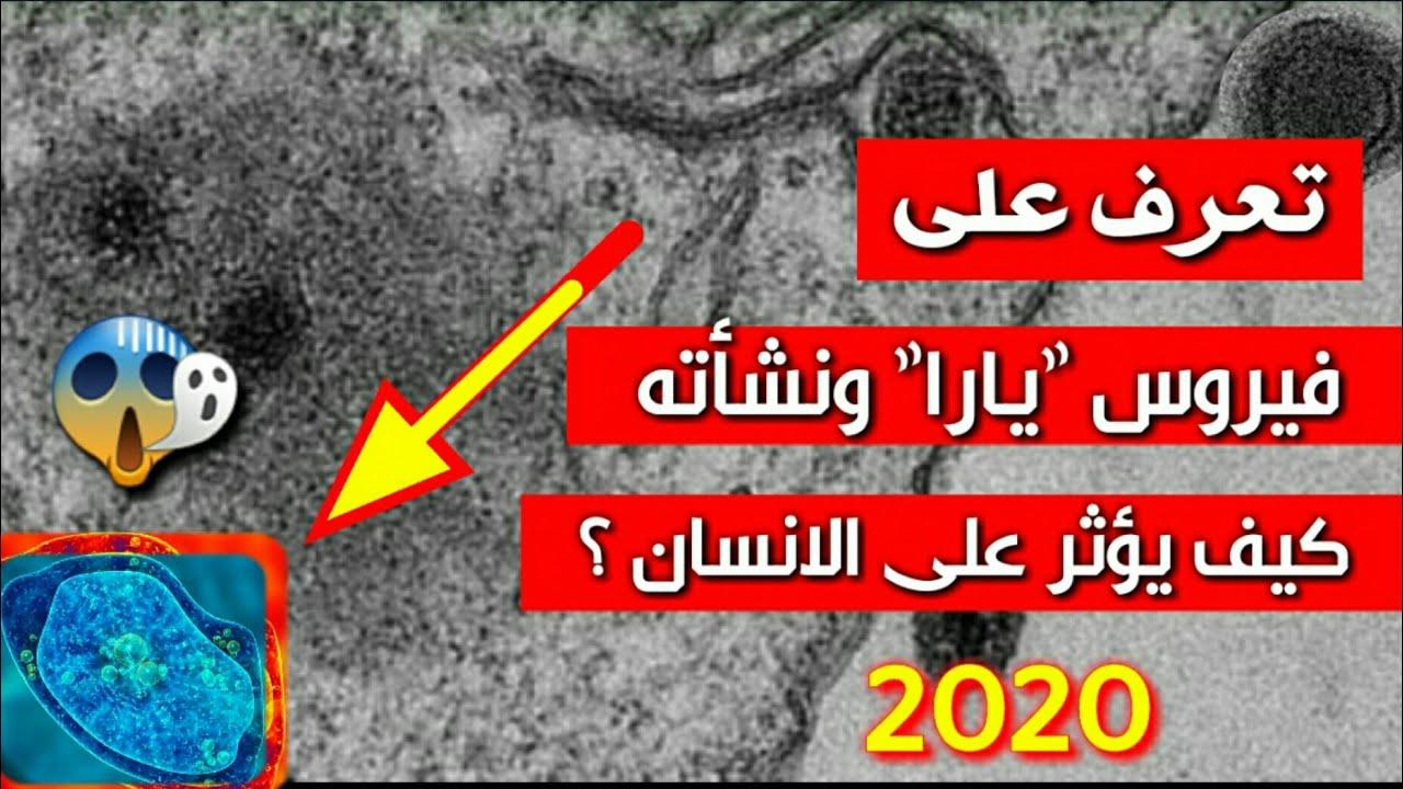"""""""2020 عام الفيروسات"""" ظهور فيروس يارا الغامض ومدى خطورته وتأثيره على الإنسان ومقارنة بينه وبين كورونا 1"""