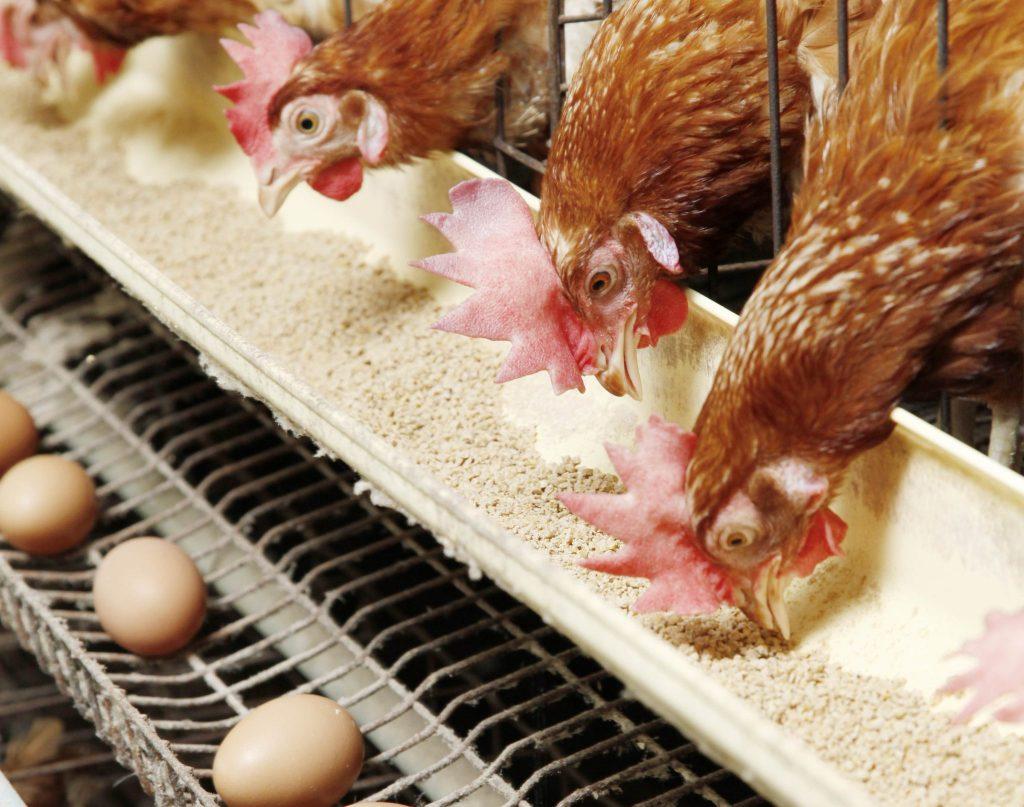 مشروع بحث أهمية الإنتاج الحيواني