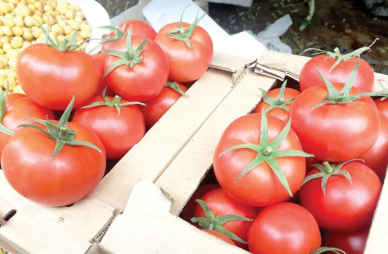 مجنونة يا طماطم.. نقيب الفلاح يتوقع ارتفاع أسعارها خلال تلك الفترة ويكشف عن الأسباب