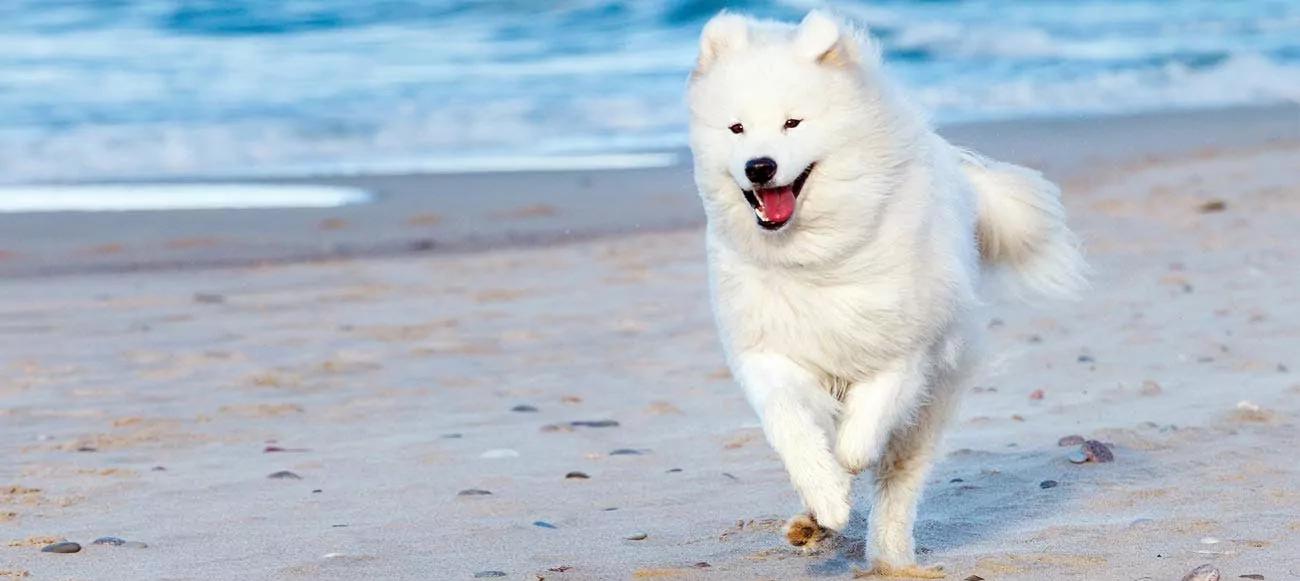 أغلي 10 فصائل كلاب في العالم تعرف عليهم الآن