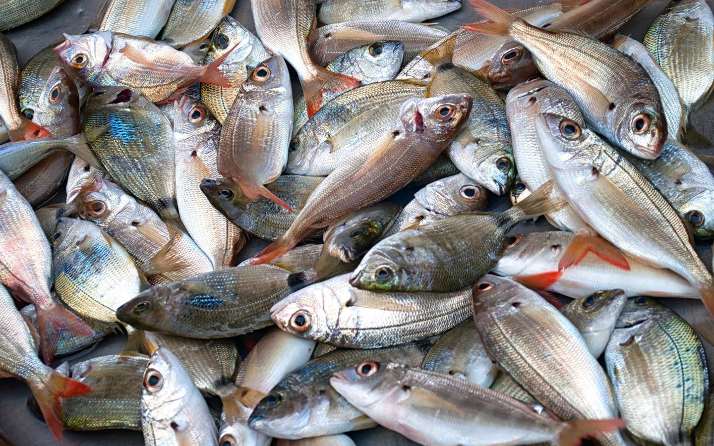 أسعار الأسماك اليوم الأحد 12-7-2020 27
