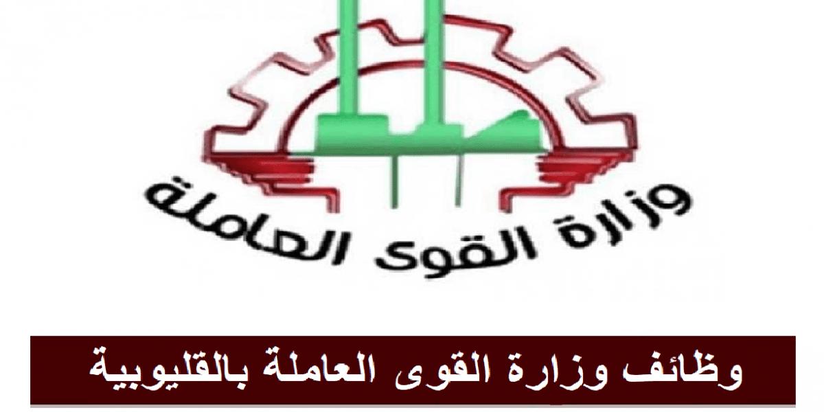 لجميع المؤهلات  وزارة القوى العاملة والهجرة تعلن عن 263 فرصة عمل بمحافظة القليوبية