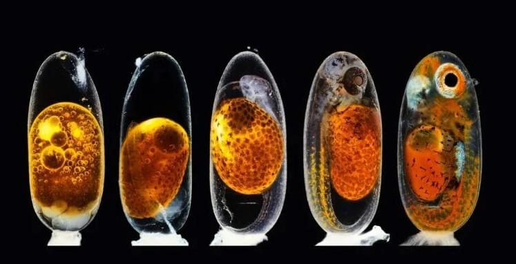أفضل صور العلوم لعام 2020 جنين سمكة المهرج