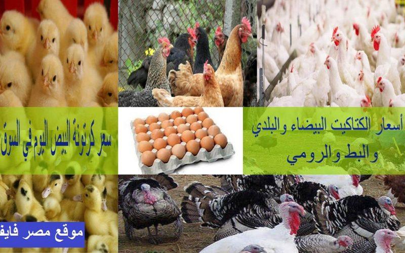 سعر الكتكوت الأبيض اليوم الثلاثاء 16 فبراير وأسعار البط والرومي والدواجن البيضاء والساسو والبلدي