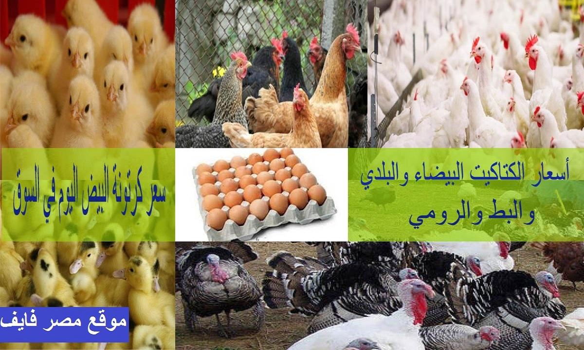 سعر الكتكوت الأبيض اليوم الأحد 7 مارس وسعر الفراخ والبط والبيض في بورصة الدواجن 5