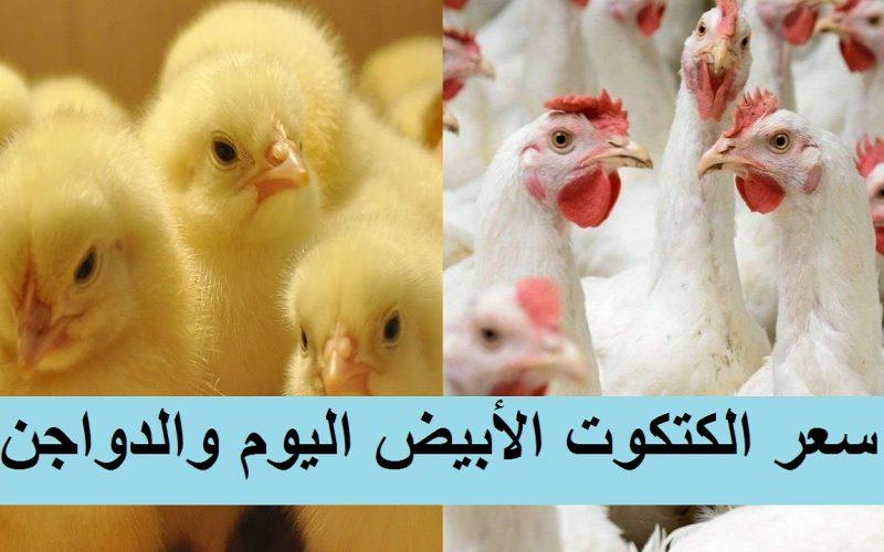 """سعر الكتكوت الأبيض اليوم الإثنين 8 مارس وسعر الفراخ اليوم في بورصة الدواجن وأسعار البط """"لحم وكتاكيت"""""""