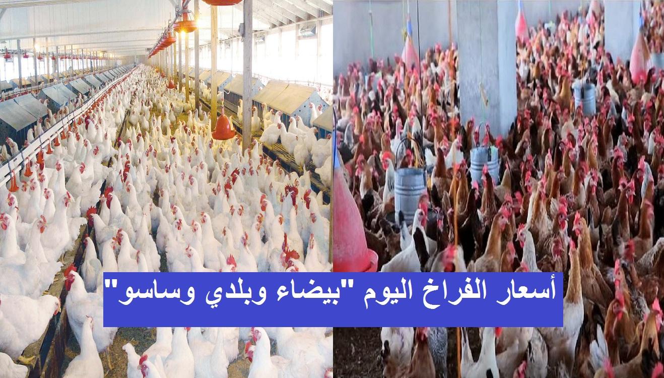 أسعار بورصة الدواجن والبيض.. سعر الفراخ اليوم الثلاثاء 2 مارس 2021 5