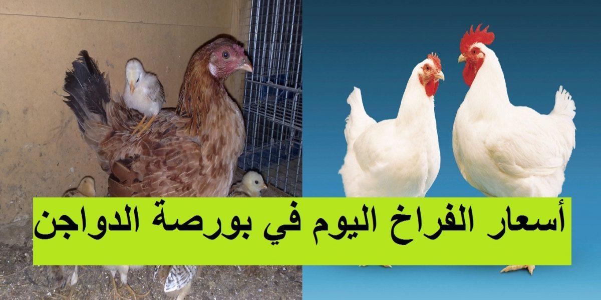 بورصة الدواجن.. سعر الفراخ اليوم الثلاثاء 2 مارس وسعر الكتكوت الأبيض اليوم في جميع الشركات