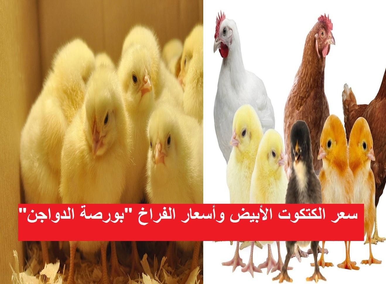 بورصة الدواجن.. سعر الكتكوت الأبيض اليوم الجمعة 26 فبراير وأسعار الفراخ اليوم