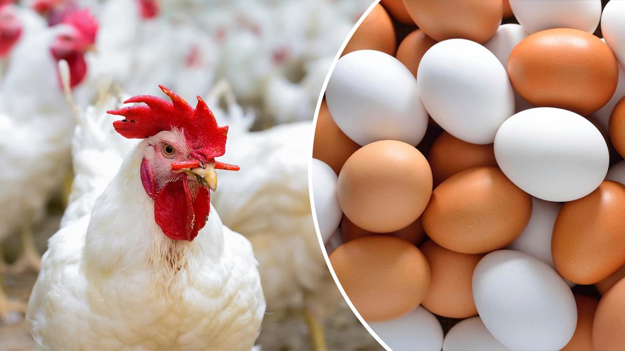 """سعر الكتكوت الأبيض اليوم الإثنين 8 مارس وسعر الفراخ اليوم في بورصة الدواجن وأسعار البط """"لحم وكتاكيت"""" 7"""