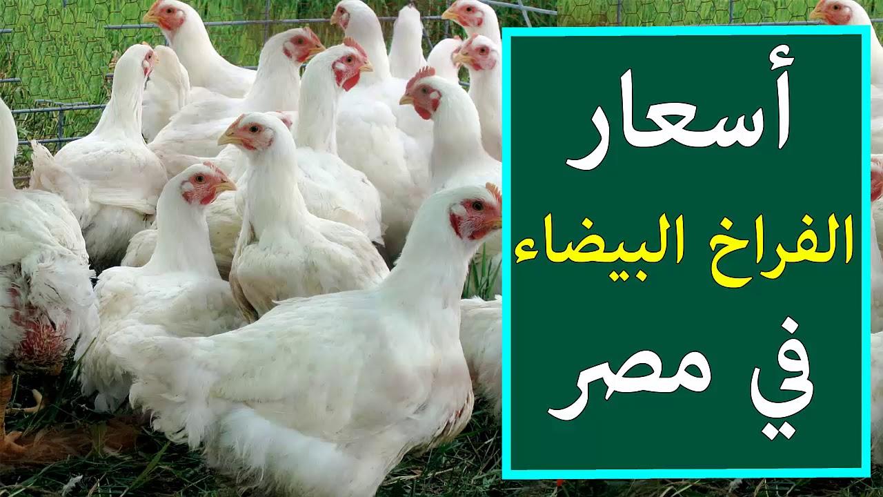 أسعار بورصة الدواجن والبيض.. سعر الفراخ اليوم الثلاثاء 2 مارس 2021 3