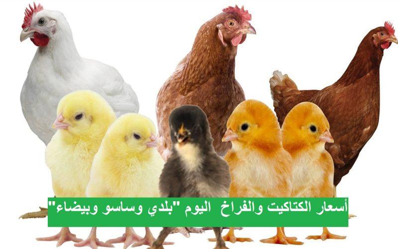 أسعار بورصة الدواجن والبيض.. سعر الفراخ اليوم الثلاثاء 2 مارس 2021