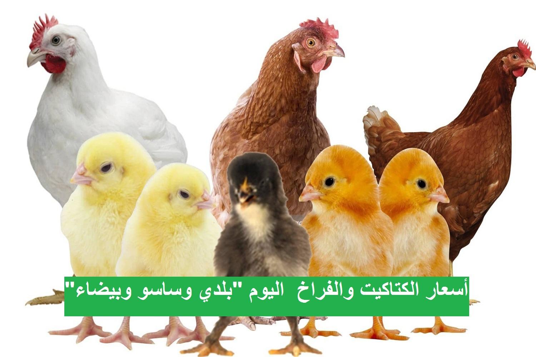 أسعار بورصة الدواجن والبيض.. سعر الفراخ اليوم الثلاثاء 2 مارس 2021 6