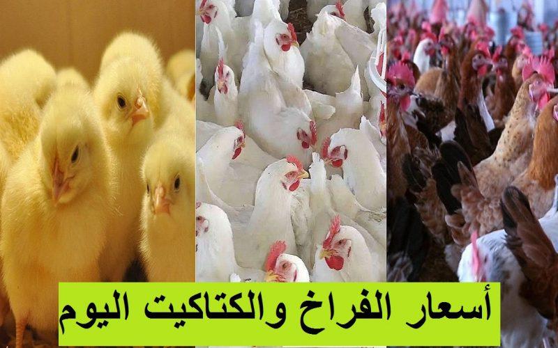 سعر الفراخ اليوم السبت 31 يوليو 2021 وأسعار بورصة الدواجن