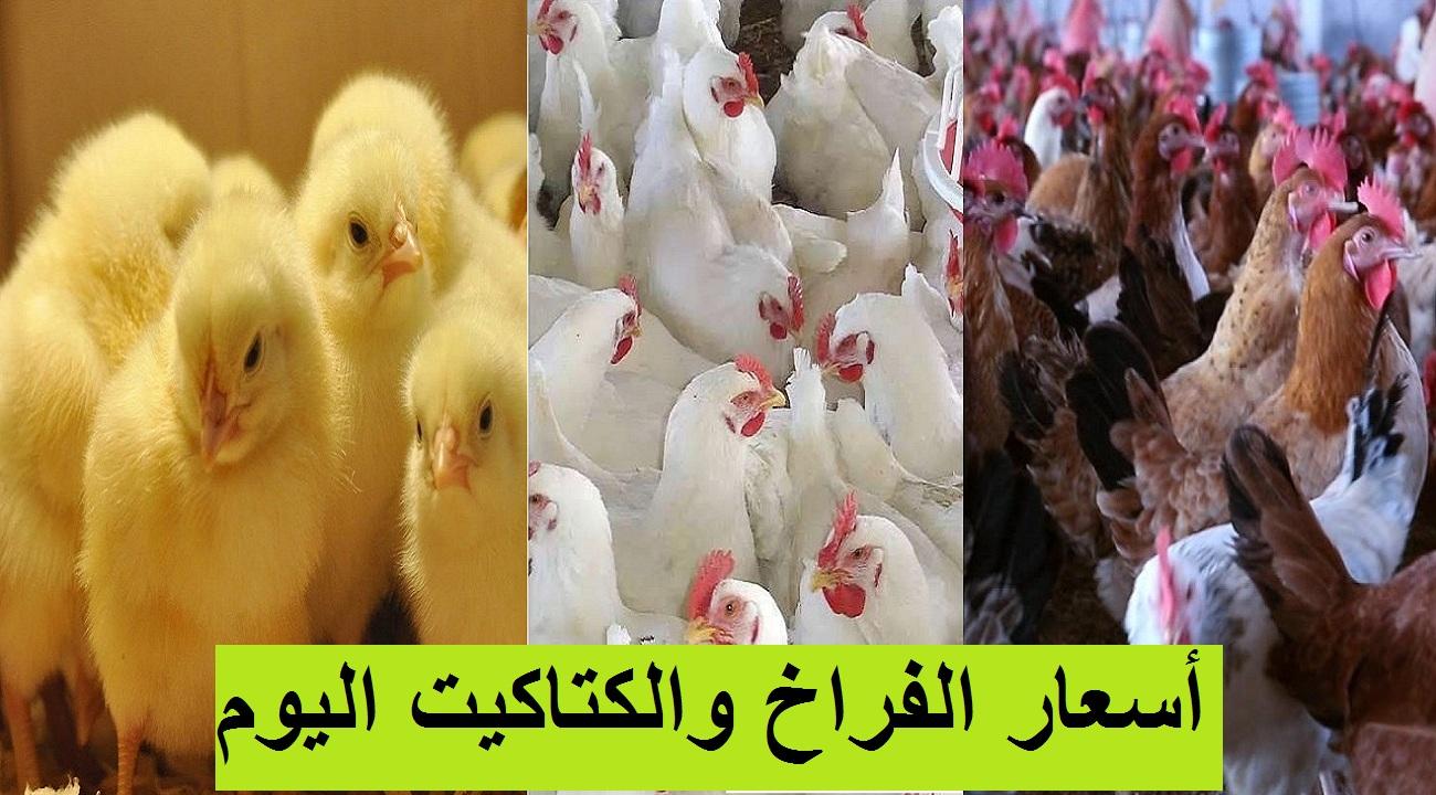 """بورصة الدواجن.. سعر الفراخ اليوم الأحد 7 مارس 2021 """"البيضاء والساسو"""" وسعر الكتكوت الأبيض 4"""