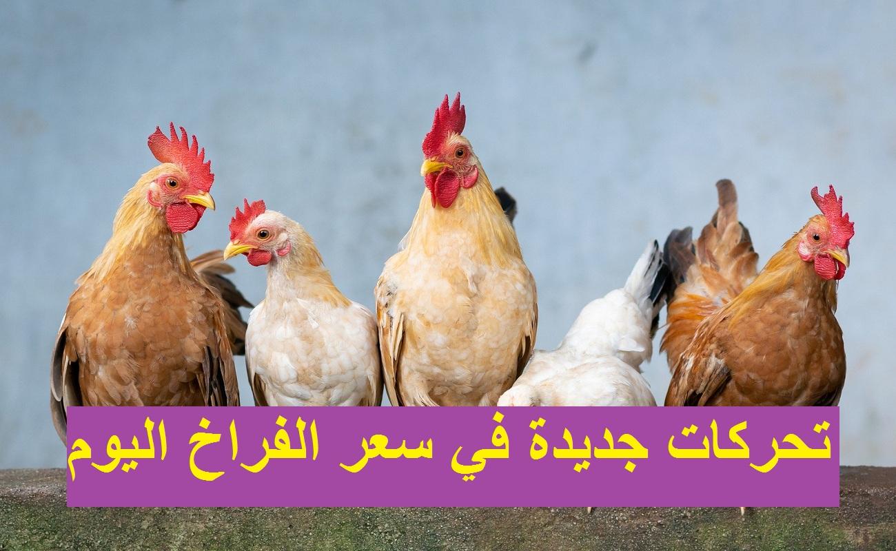 """بورصة الدواجن.. انخفاض سعر الفراخ اليوم الجمعة 12 مارس """"البيضاء والساسو والبلدي"""" وسعر الكتاكيت اليوم"""