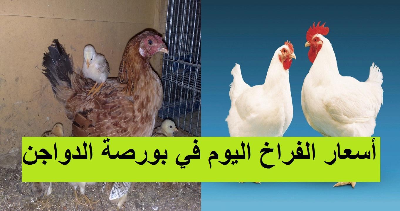 بورصة الدواجن الآن.. سعر الكتكوت الابيض اليوم 1 أبريل 2021 بعد ارتفاع سعر الفراخ البيضاء 8
