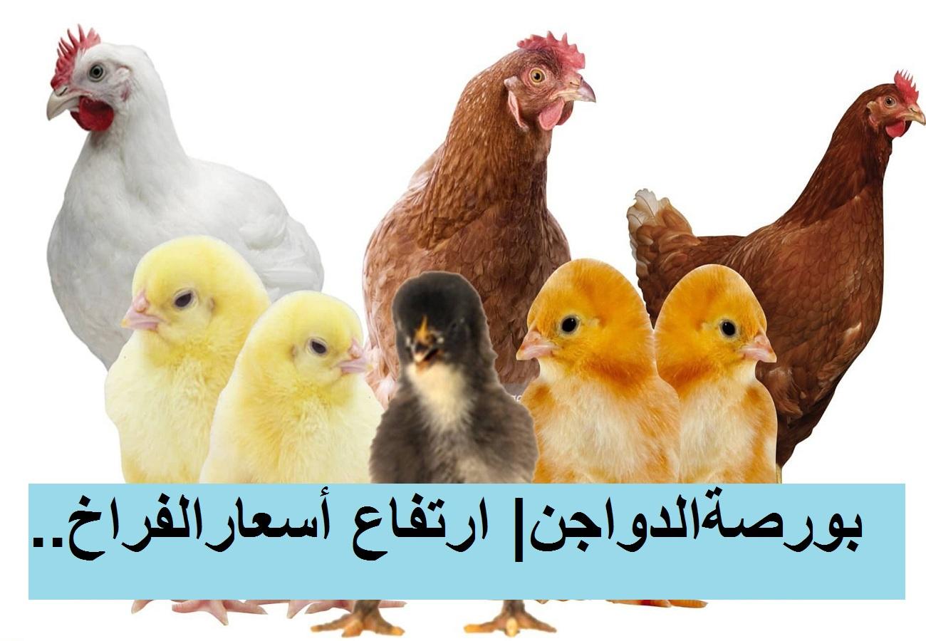 بورصة الدواجن.. سعر الفراخ البيضاء اليوم الأربعاء 31 مارس وأسعار الكتكوت الابيض وتوقعات أسعار الدواجن برمضان
