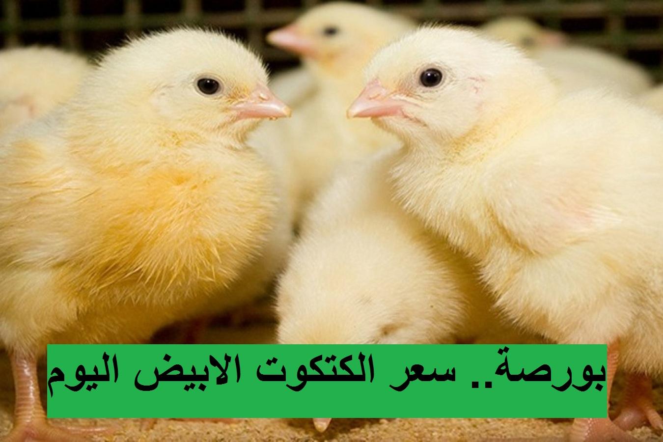 بورصة الدواجن اليوم الأحد 18 أبريل 2021.. أسعار الفراخ البيضاء والساسو والكتكوت الابيض 3