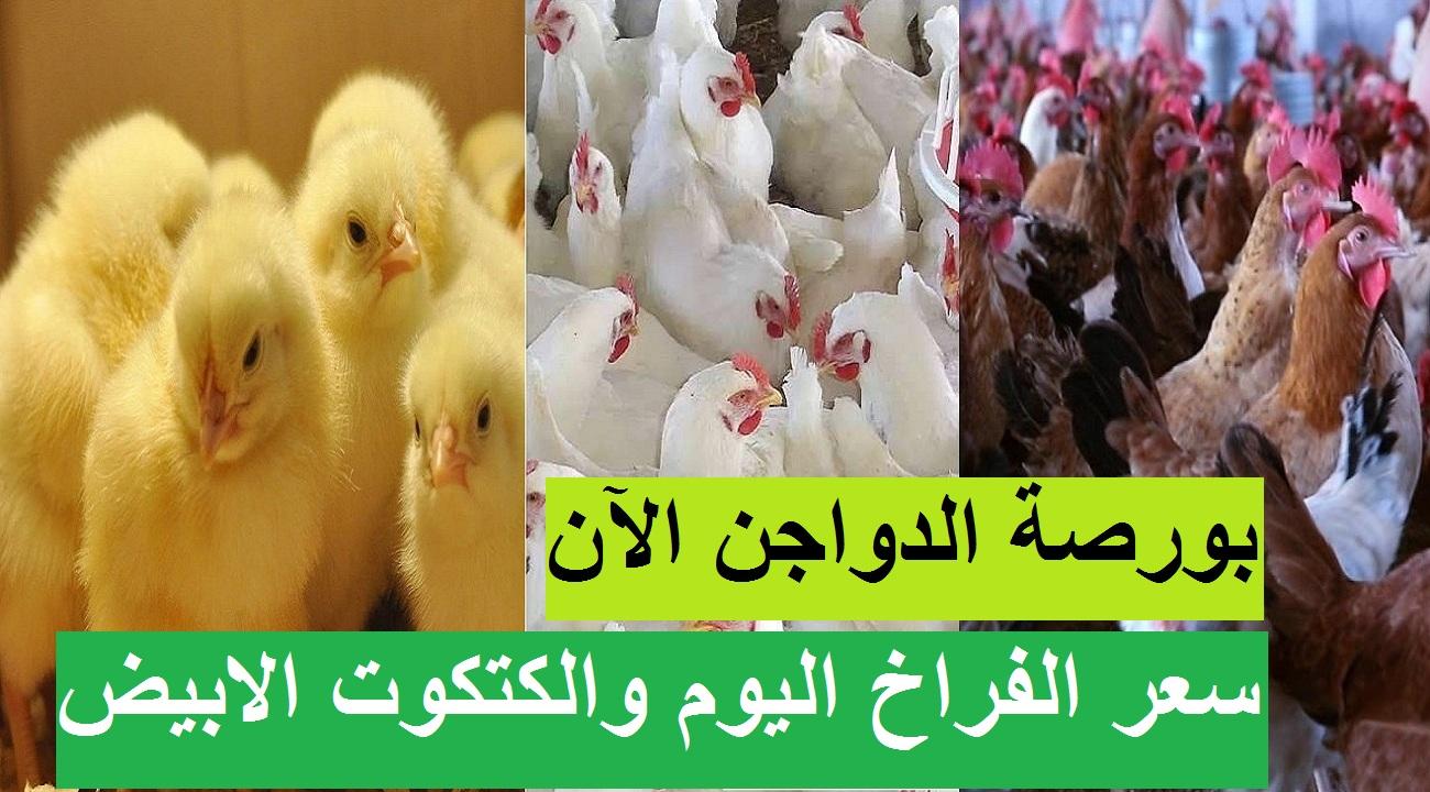 بورصة الدواجن اليوم الأحد 18 أبريل 2021.. أسعار الفراخ البيضاء والساسو والكتكوت الابيض