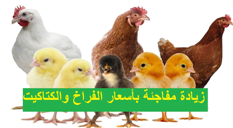 بورصة الدواجن.. سعر الفراخ اليوم بالمزارع والمحلات وأسعار الكتكوت الأبيض الأحد 7 مارس 2021