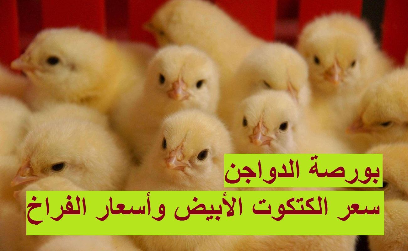بورصة الدواجن الآن.. ارتفاع سعر الكتكوت الابيض اليوم الإثنين 22 مارس وأسعار الفراخ البيضا والساسو