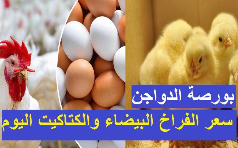 سعر الفراخ البيضاء اليوم السبت 24 يوليو 2021 وأسعار الكتاكيت والبيض