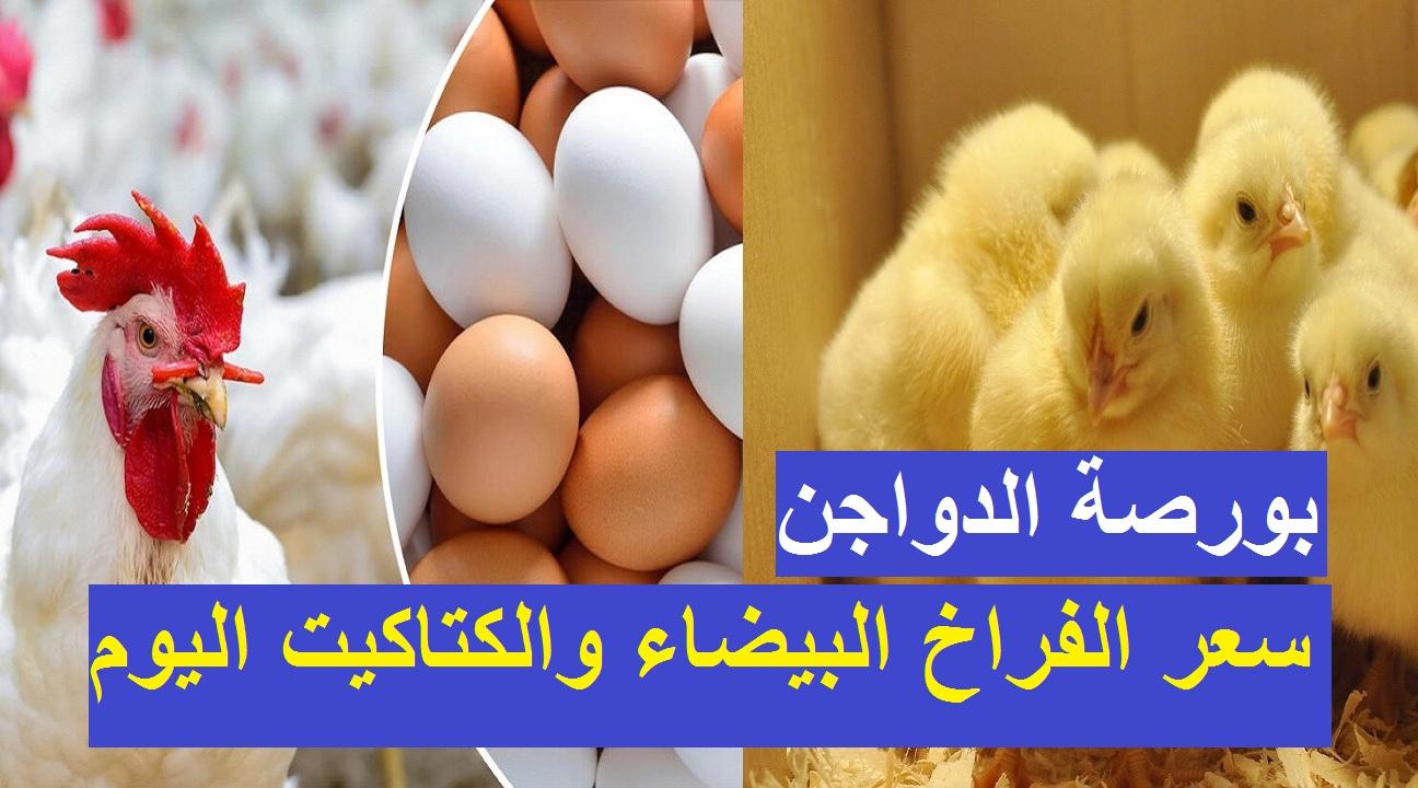 بورصة الدواجن الأحد.. زيادة جديدة في سعر الفراخ البيضاء اليوم 9 مايو والكتكوت الابيض يسجل 2 جنيه