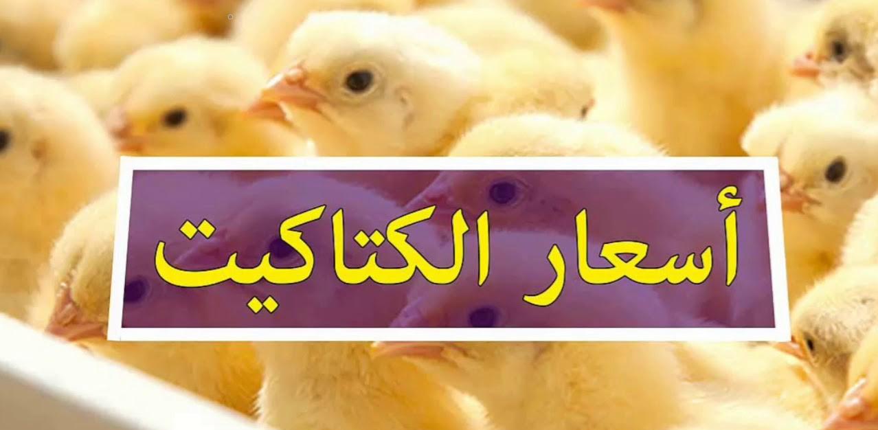 بورصة الدواجن.. سعر الفراخ اليوم بالمزارع والمحلات وأسعار الكتكوت الأبيض الأحد 7 مارس 2021 3