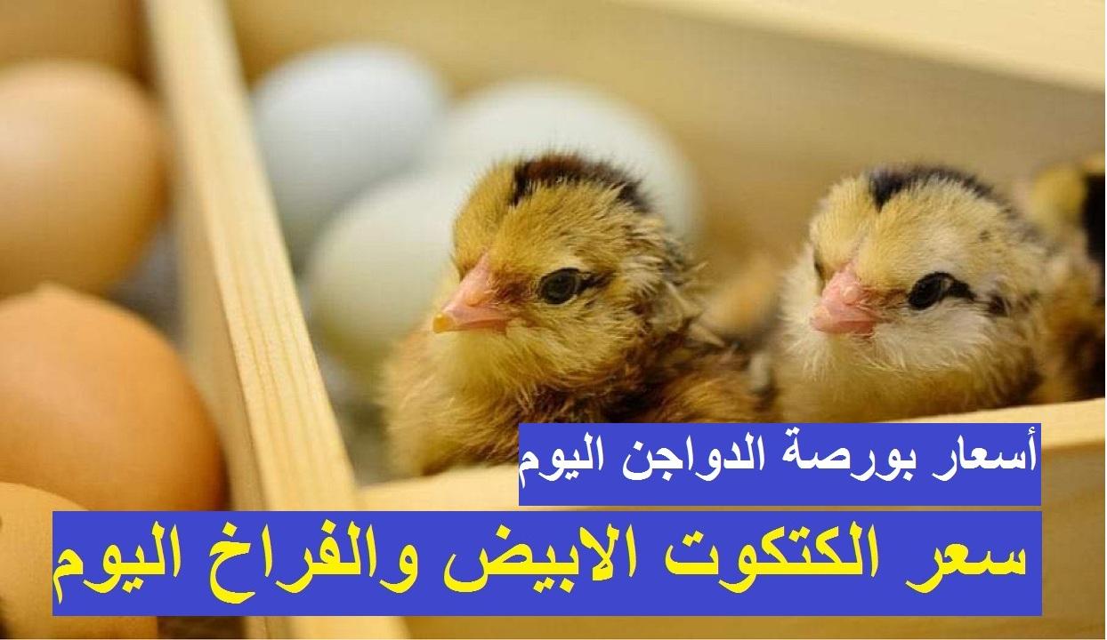 أسعار بورصة الدواجن.. استقرار سعر الكتكوت الابيض اليوم الجمعة 2 أبريل وتأرجح في سعر الفراخ البيضاء