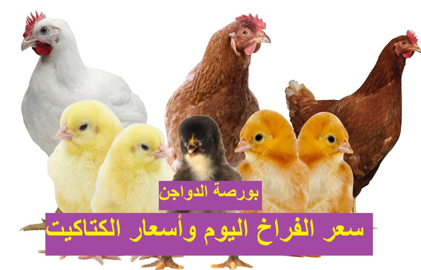 بورصة الدواجن الثلاثاء.. سعر الفراخ اليوم 27 أبريل بعد تراجع سعر الكتكوت الابيض 156