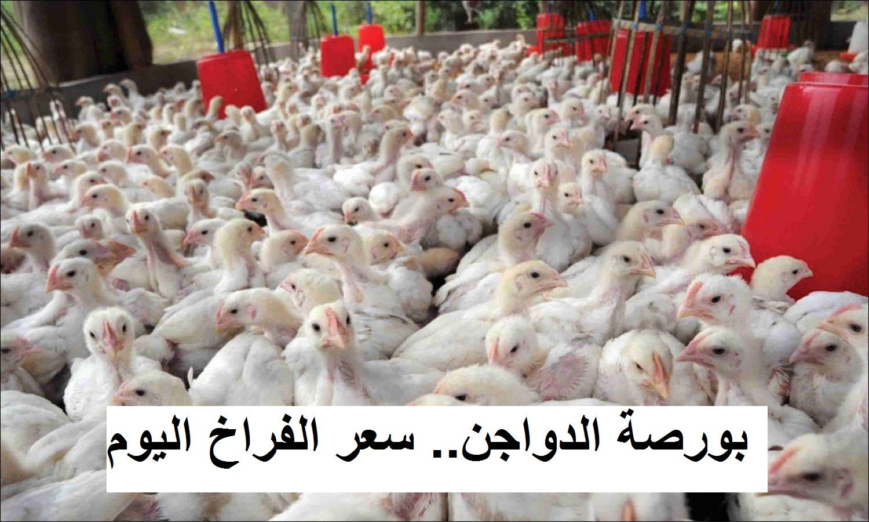 بورصة الدواجن اليوم.. ارتفاع مفاجئ في سعر الكتكوت الأبيض الأربعاء 12 مايو بعد زيادة سعر الفراخ البيضاء 10