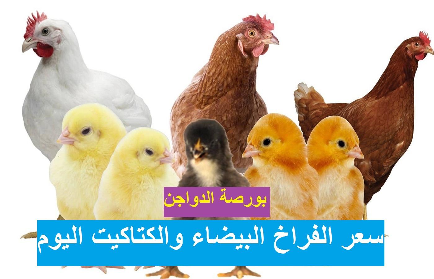 بورصة الدواجن يوم 2 رمضان.. أسعار الدواجن اليوم الأربعاء 14 أبريل 2021 وسعر الفراخ وسعر الكتكوت الابيض 9