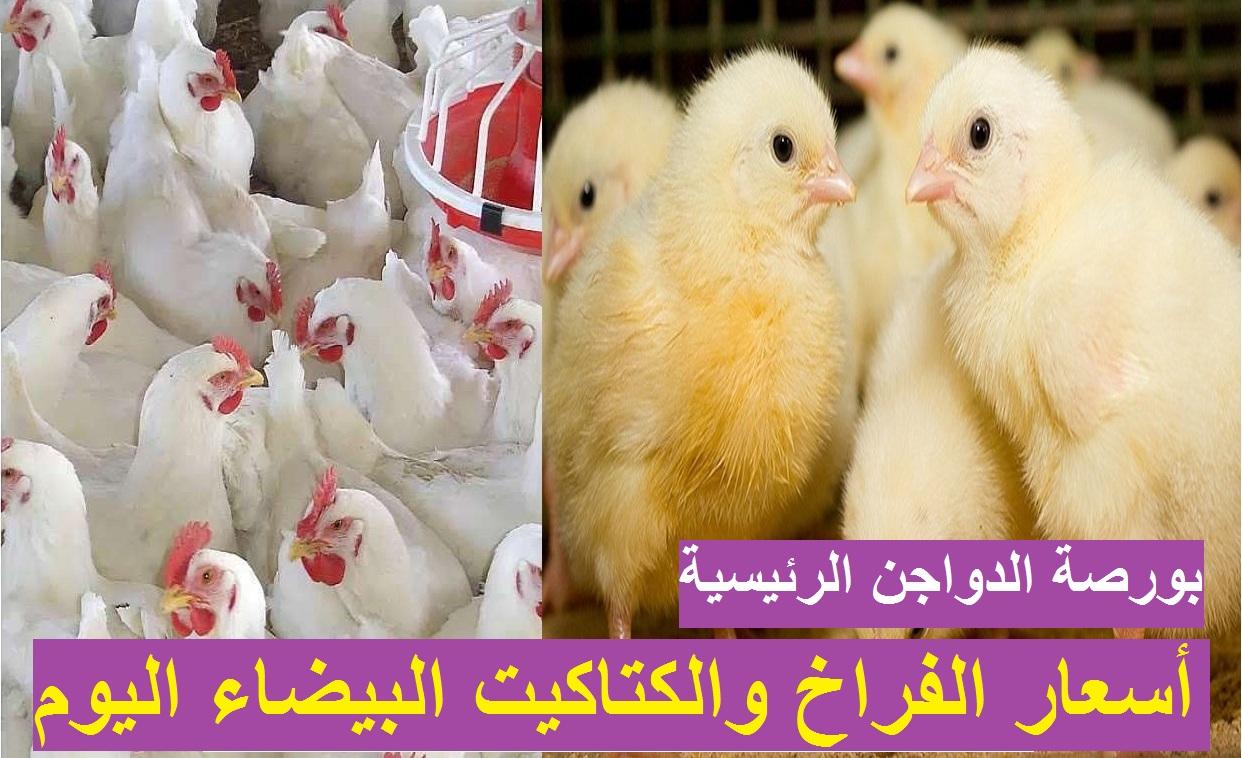 بورصة الدواجن.. سعر الفراخ البيضاء اليوم 12 أبريل 2021 بعد انخفاض سعر الكتكوت الابيض